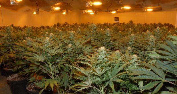 Marijuana Staffing Agency