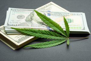 Cannabis Business Ideas