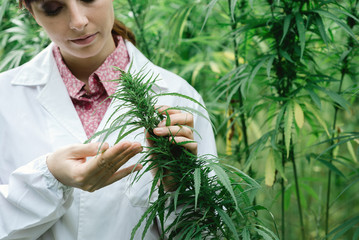 women marijuana jobs