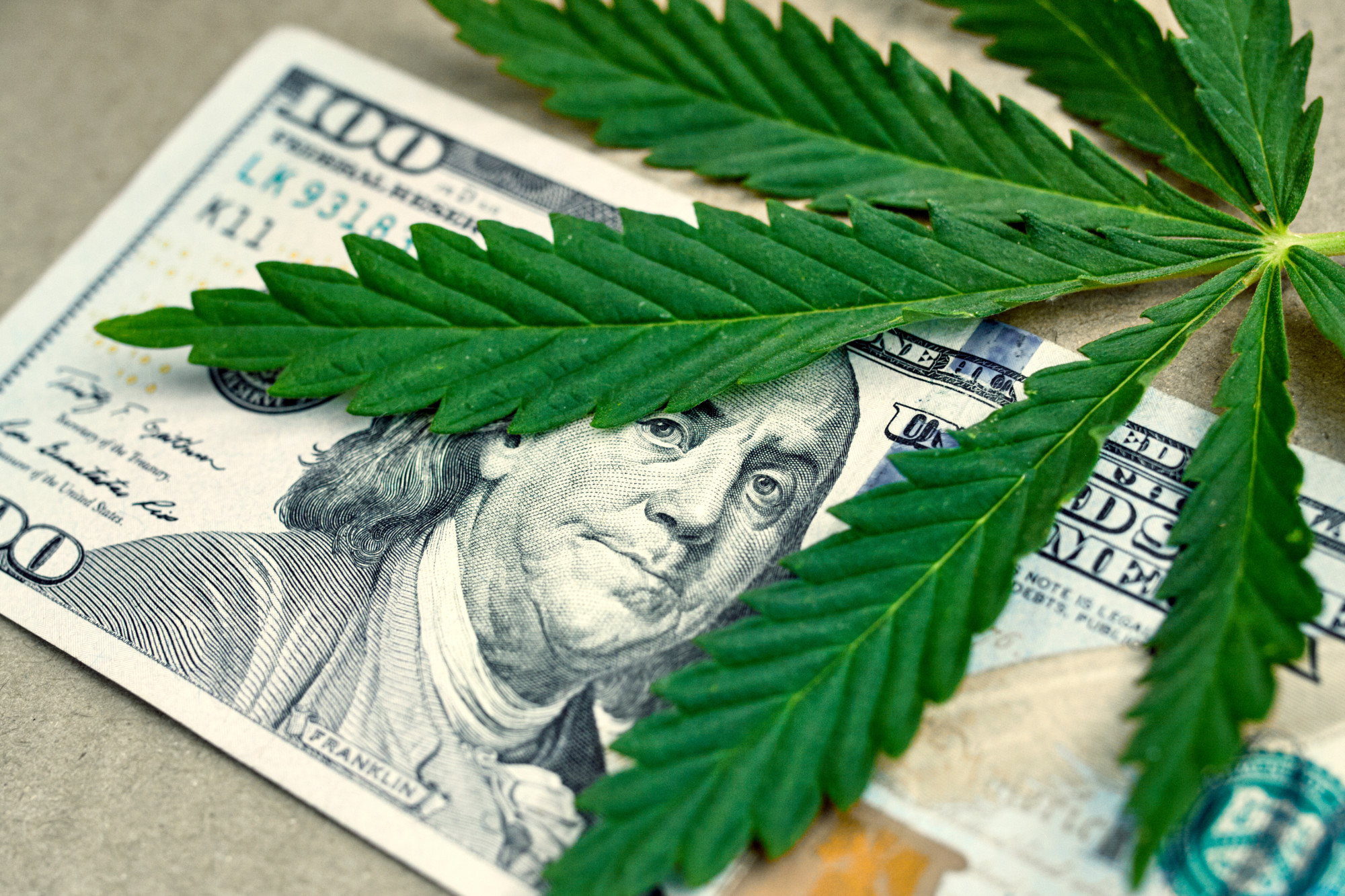 Breaking Into The Industry 10 Cannabis Business Ideas To Get Started
